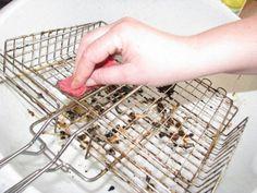 Bicarbonatul de sodiu este un adevărat rege al curățeniei: 22 de moduri de utilizare. - Fasingur How To Dry Basil, Ale, Herbs, Food, Tips, Ale Beer, Essen, Herb, Meals