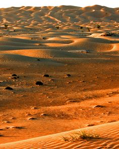 Dunes by snorvell on 500px