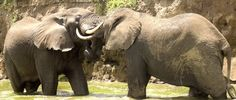 Trevor Tour Safaris Africa   Your leisure heights experience