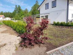 Mrs Lindas Underbara Värld - Japansk blodlönn Thuja Smaragd, Outdoor Structures, Plants, Summer, Allotment, Summer Time, Plant, Planets