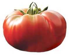 Heirloom Tomato Seeds, Tomatoes, Non-GMO, Untreated, Organic Seed – Sandia Seed Company Heirloom Tomato Seeds, Heirloom Tomatoes, Potted Fruit Trees, Types Of Lettuce, Famous African Americans, Cherokee Purple, Seed Catalogs, Organic Seeds, Red Fruit