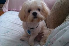 MY PUPPY, BENNY!  :D  He gives me such a headache, but he's so cute.
