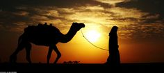 shepherd and camel #sunset