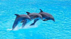 dolphin - Google Search