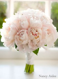 Blooming Gallery - Bouquet of Peonies