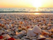 Nothing says a weekend at the beach better than shelling and Sanibel delivers!