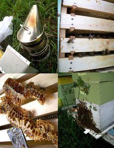 my honey bees!