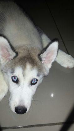 my dog, he's called Ario