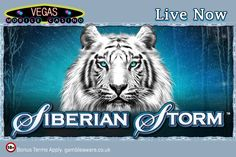 Are you ready to beat battle storm? Then face the Serbian Storm at Vegas Mobile Casino for getting huge fortunes: https://www.vegasmobilecasino.co.uk/slots/siberian-storm/