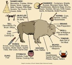 visual of how Native Americans used all the parts of a buffalo.Awesome visual of how Native Americans used all the parts of a buffalo. The Meaning of Native American Horse Markings Plains Bison vs Wood Bison Medicine Wheels & Shamanic Cosmology