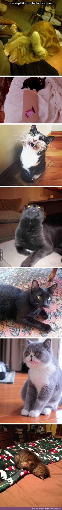 These cat pics made my day
