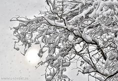 Winterbilder, die Sonne schaut sich kurz für nur eine Minute das Schneetreiben an und verschwindet ganz erschrocken wieder im Weltraum.
