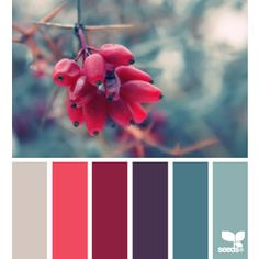 design seeds | search | for all who ♥ color