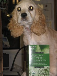 Trader Joe's Mint Melange Tea – Ghost Dog Approved