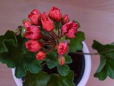 Carmen Andrea Plants, Plant, Planets