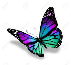 Dessin Papillon En Couleur dessin papillons couleur a imprimer   dessin en couleurs à imprimer