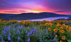 Located between the moist, heavily-forested west side of the Cascades and the drier bunch grass prairies of the east, Tom McCall Preserve comes into spectacular bloom every spring (Photo by Jesse Estes). Discover more at traveloregon.com and www.discoveramerica.com