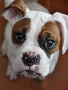 .agh those eyes! Yes you can have whatever you want, just come snuggle with me!