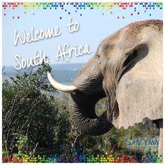 Contact Us, Management Company, Destinations, Elephant, African, Travel, Animals, Viajes, Animales