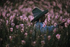 A woman harvests vanda orchids from Hilo nursery fields. Hilo, Hawaii. ROBERT MADDEN