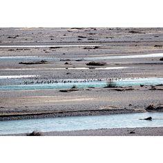 #ShareIG 'All the birds, all lined up' #igersfvg #igersud #instafriuli #igersitalia #instaplace #fvg #tagliamento #fiume #river #cornino #lago #lake #water #riservanaturale #natura #nature #birds #naturereserve #reserve #birdsanctuary #birdwatching