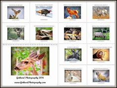 Promo: Gothard Photography 2016 Calendar. Colorado Wildlife.