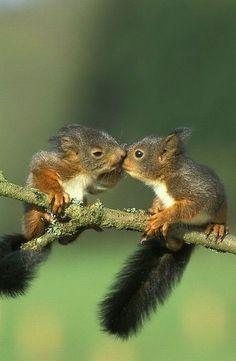 Squirrel nuzzle • photo: Rohtola on Flickr
