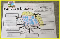 Kelly and Kim's Kindergarten Kreations: Butterflies, Free For Alls, Giveaways, Oh my! Kindergarten Science, Teaching Science, Teaching Ideas, Spring Activities, Learning Activities, Butterfly Eyes, Butterflies, Thing 1, Book Themes