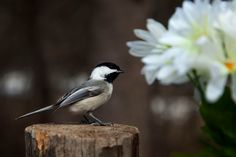 Flowers and bird by Andre Villeneuve - Photo 209893945 / 500px