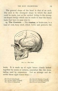 *The Graphics Fairy LLC*: Vintage Halloween Clip Art - Anatomy Skull - Printable
