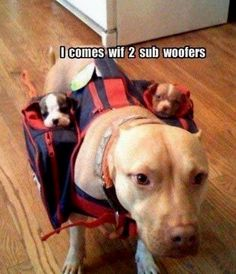 Subwoofers indeed