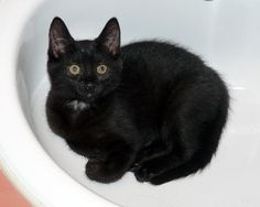 Meet 11 wk old Ponoka.  She is the smallest of the kittens found in a shed in Surrey.  She is definitely a lover not a fighter and would be best in a quiet home.  www.orphankittenrescue.com