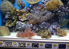 http://www.acuaristica.com/blog/2012/03/cynops-importaciones-visito-la-feria-americana-de-global-pet-expo/