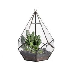 Mother's Day Gift Ideas You're Mom Will Love   Teardrop Glass Plant Terrarium