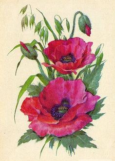 windmill Flower watercolor painting print rose butterfly ACEO print poppy