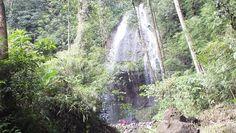 Curug Cikoleangkak Karawang Jawa Barat Indinesia Plants, Planters, Plant, Planting