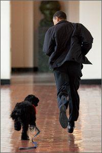 President Obama with Bo at the  White House. (Pete Souza/The White House)