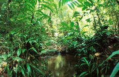 L'Amazonie : une forêt équatoriale de tous les records - Brasil Passion