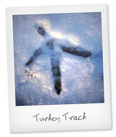 Animal Tracks in the Snow Water Resources, Natural Resources, Turkey Tracks, North American Animals, Animal Tracks, Winter Blankets, Outdoor Recreation, Oil And Gas, Footprints