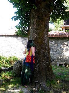 Otro árbol besado en Sobrado- A Coruña, en septiembre de 2010