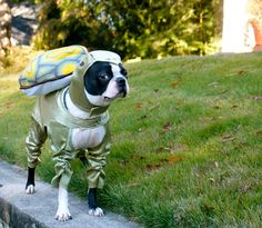Boston Terrier Costume - Turtle