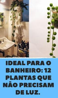 Ideal for the bathroom: 12 plants that hardly need any light- Ideal fürs Bad: 12 Pflanzen, die kaum Licht brauchen Edamame – is a small power bean that makes you happy. Especially when it comes in the salad bowl with bulgur, grapes and walnuts. Edamame, Indoor Garden, Garden Plants, Indoor Plants, Home And Garden, Comment Planter, Plants Are Friends, Bathroom Plants, Interior Garden