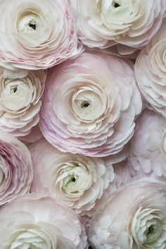 Cloni ranunculus from a local flower boutique, Paris