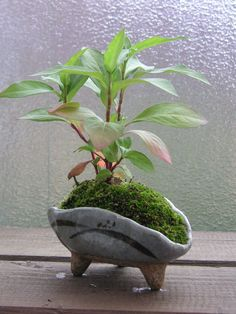 Unique bonsai kokedama Ball Ideas for Hanging Garden Plants selber machen ball Bonsai Plants, Bonsai Garden, Garden Plants, Indoor Plants, Bonsai Trees, Cactus Plants, Indoor Outdoor, Mini Jardin Zen, Pot Jardin