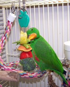 A great beginner foraging toy is a skewer hung in the cage with vegetables and fruit