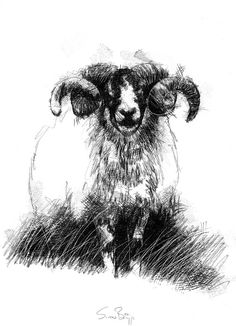 Old ram, Artist Sean Briggs producing a sketch a day, prints available at https://www.etsy.com/uk/shop/SketchyLife  ##artist ##Etsyshophttp://etsy.me/1rARc0J#ram ##illustration#ink#print#draw©#Sean_Briggs #art #drawing #sketch #stone