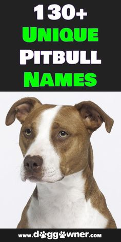 Different names suit different breeds and every breed has several variations, so it is important to find one that matches your Pitbull. #pitbullnames #dognames #pitbulls