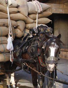 Conflictos mundiales: Derecho animal al trabajo razonable y la muerte in...
