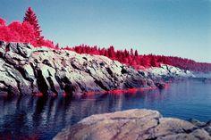 Bold Coast in Maine shot on color infrared film [1950 x 1300] OC #reddit
