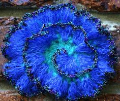 Spiral Crochet Flower- Prudence M  http://www.flickr.com/photos/prudencemapstone/2937044863/lightbox/